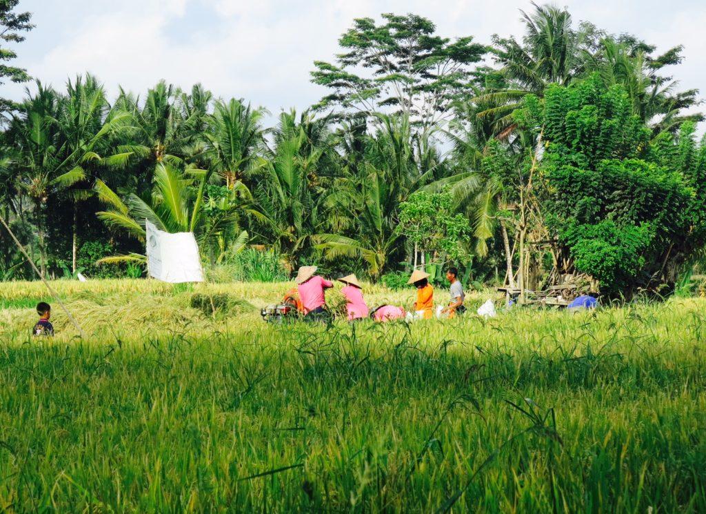 Rejs til Bali med børn