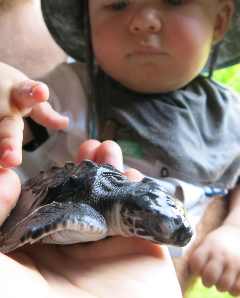 I Pemuteran kan man hjælpe havskildpadderne